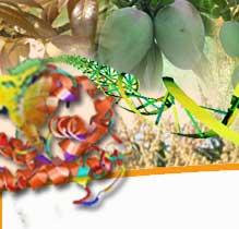 Mango Stem Borer Classification Essay - image 4